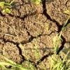 Специалисты: в 2013 году в Татарстане ожидается аномальная засуха
