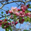 Весна придет в Татарстан 1 апреля