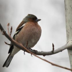 птицы татарстана фото